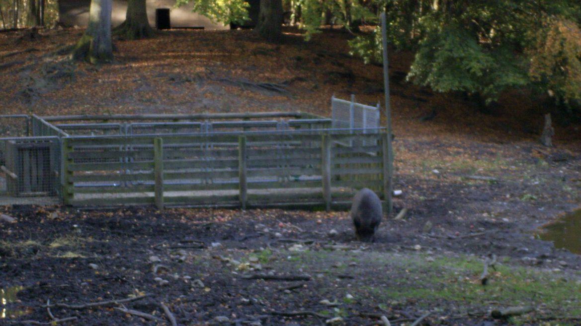 cropped-Wildschweingatter.jpg
