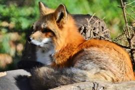 Jäger verbreiten Krankheiten