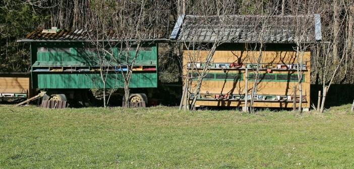 St. Gallen: Hobby-Jäger schiesst auf Bienenhaus