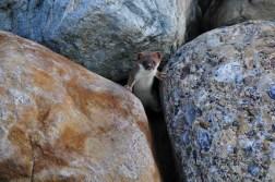 Pro Natura Tier des Jahres 2018 ADOLF DURRER