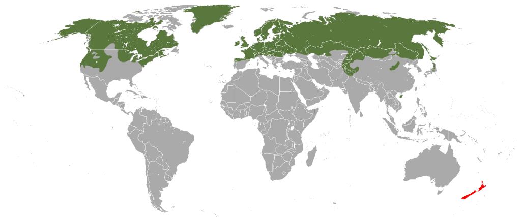 Verbreitungsgebiet Hermelin