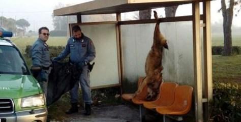 Italien: Fleisch-Mafia hinter bestialischer Wolf-Exekution