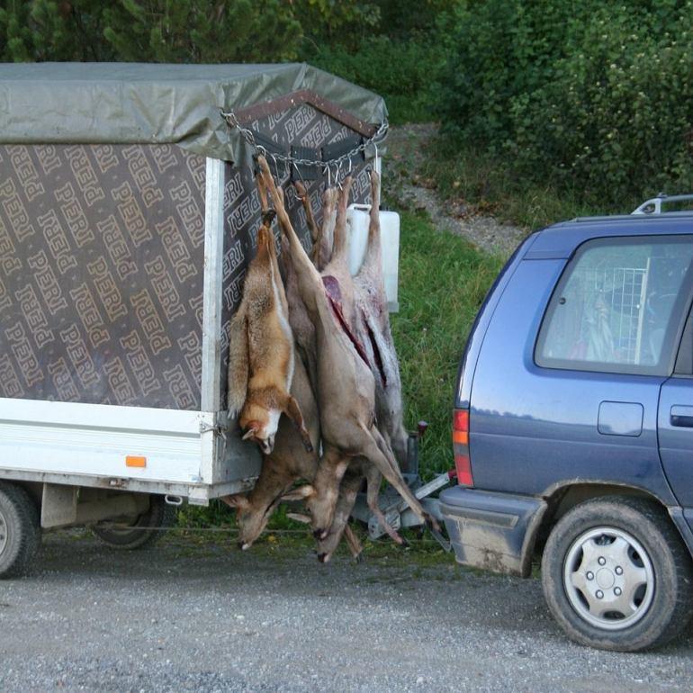 Jagd im Kanton Zürich mit Abgasen im Wildbret. Hygiene gleich Null!