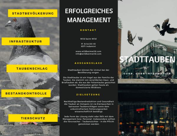 Erfolgreiches Stadttauben Management