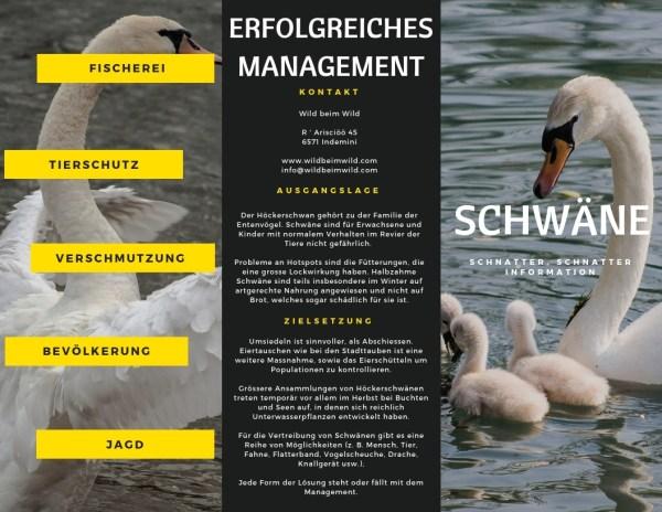 Erfolgreiches Schwan Management