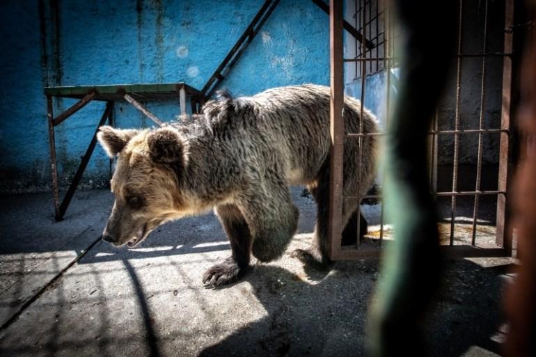 Albania, Fier | 2018 09 18 | Wild animals at Safari Park Zoo Fier.