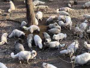 Freiheit für Füchse