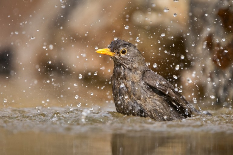 Waldbewohner: Hitze da - heimische Wildtiere bleiben cool