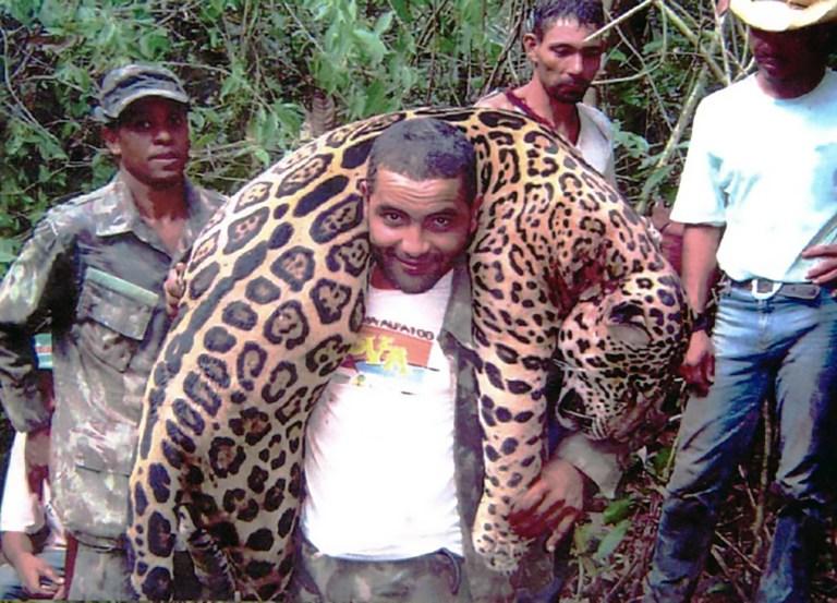Brasilien: Zahnarzt schlachtete 1'000 geschützte Jaguare
