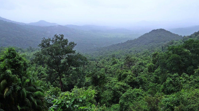 cropped-Globaler-Wald-Notstand.jpg
