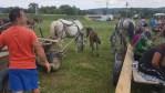 Rumänien Massive Tierquälerei auf Pferdemärkten