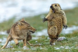 Wildtier Foto des Jahres