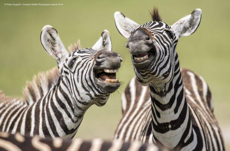 Wildlife Comedy Awards 2019: Das sind die 40 Tierfotos des Jahres
