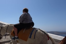 Griechenland Esel und Maultiere weiterhin gequält