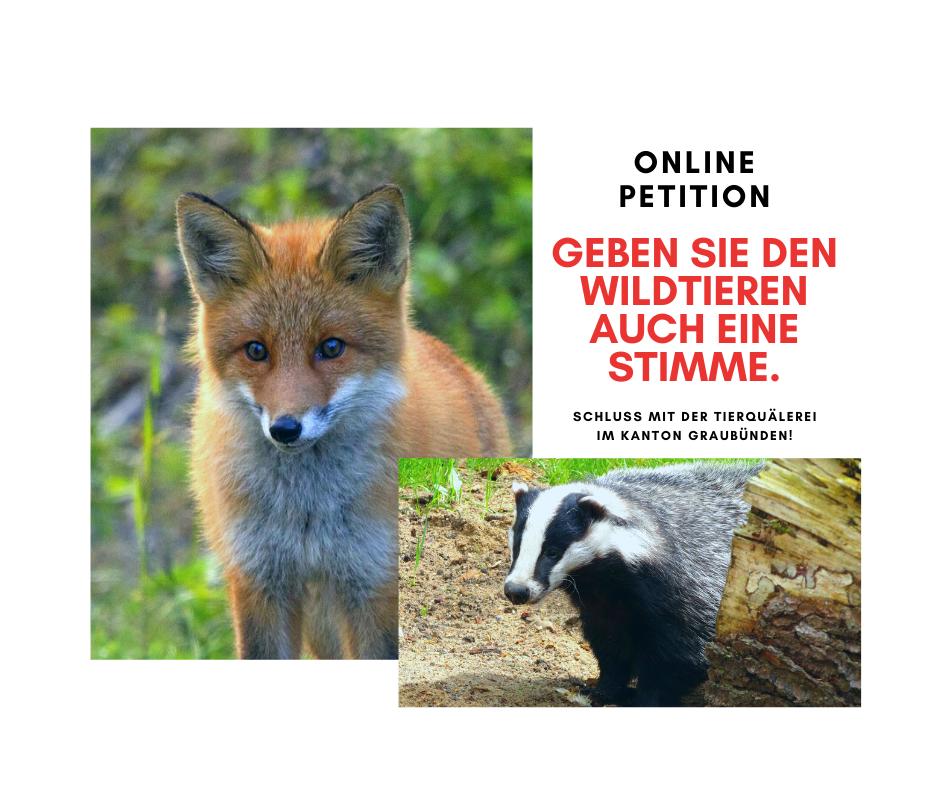 Stoppt das Fuchs- und Dachsmassaker in Laax / GR