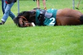 Pferderennsport Mannheim