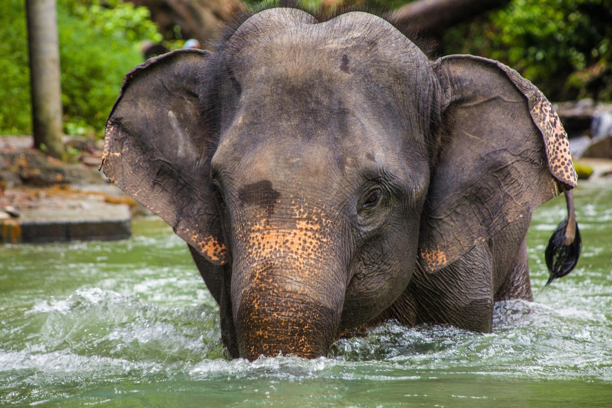 Artenschutz Elefanten, Jaguare und Haie profitieren