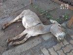 Kenia Verbietet Tötung und Export von Eseln nach China