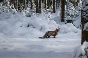 Tierquälerei: Schweizer Hobby-Jäger jagen nicht waidgerecht