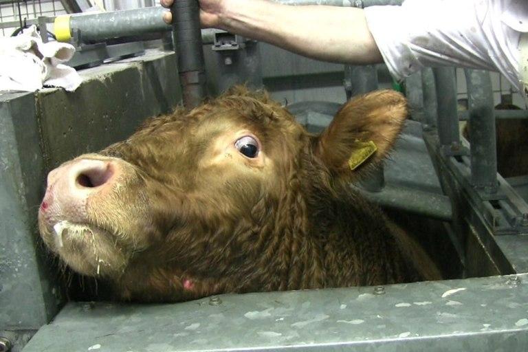 Schlachthof Corona-Hotspot - Es ist Zeit, Fleisch zu verbannen