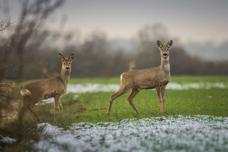 Bundesverwaltungsgericht Grundstück im Kreis Olpe wird ab sofort jagdfrei