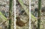 Bad Dürkheim: Jäger hetzt Hund wiederholt auf verängstigtes Wildschwein