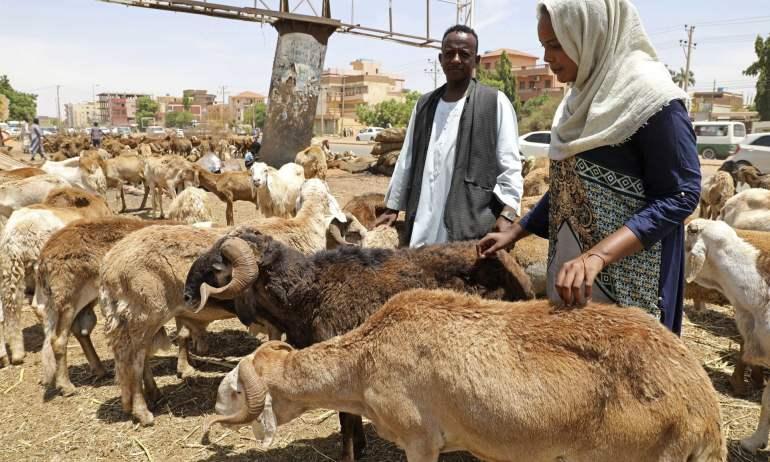 Saudi-Arabien: 3'000 Schafe sterben nach Lebendausfuhr