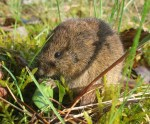 Thüringer Bauernverband klagt über Mäuseplage