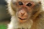 Tierversuche beinhalten eine staatliche Lizenz zum Quälen