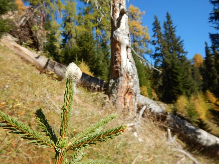 Jagdgesetz: NEIN im Interesse vom Bergwald