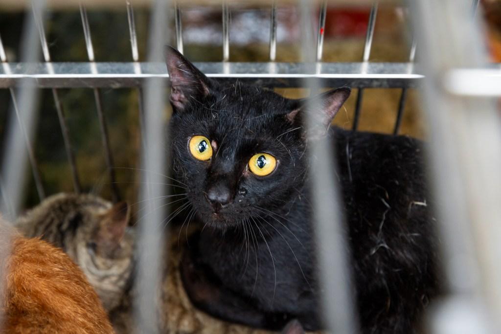 Der brutale Handel mit Katzenfleisch in Vietnam