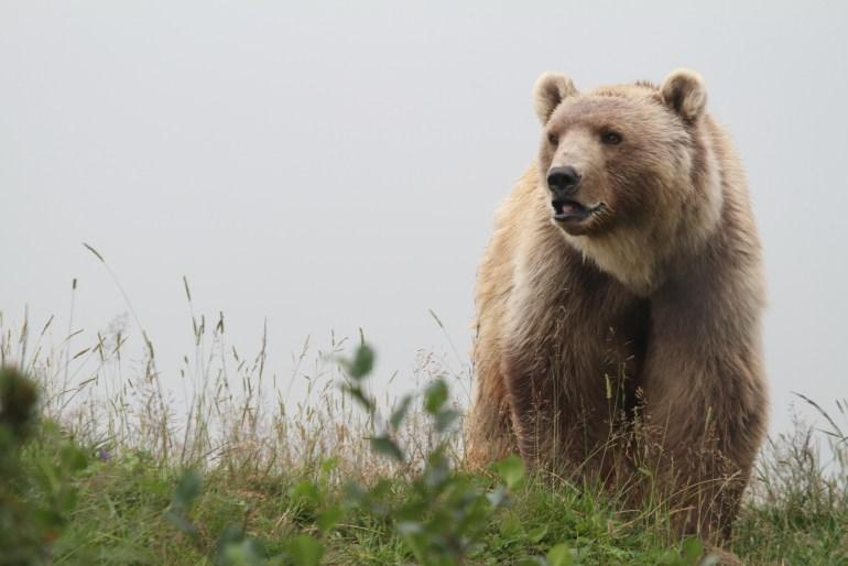 Bär Napa  © Stiftung Arosa Bären | VIER PFOTEN