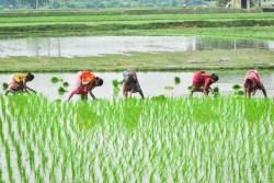 Reis mit Spinat