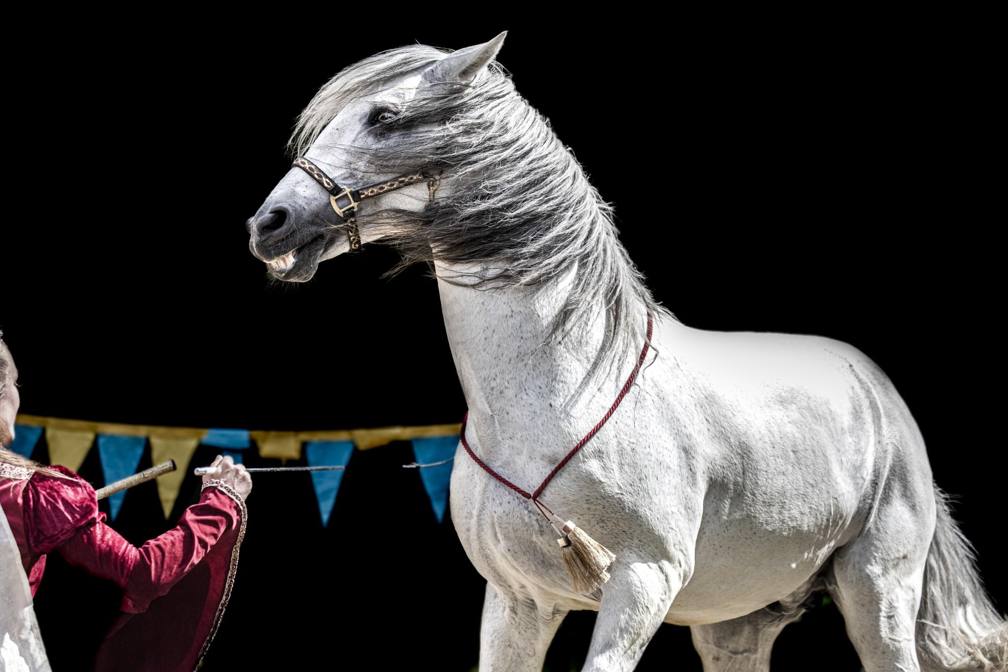 Zirkus: Zürcher Gemeinderat will Verbot mit Wildtieren