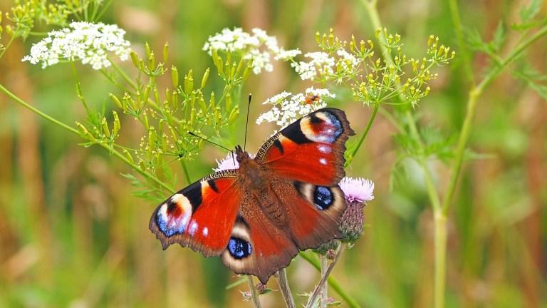 Politik will Insektensterben aufhalten