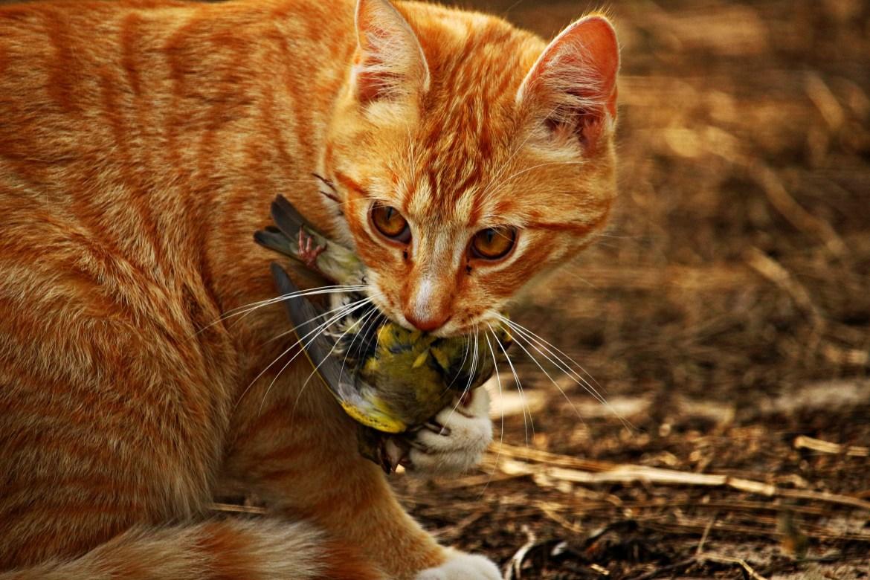 Spielen und richtige Ernährung reduziert Jagdtrieb bei Katzen