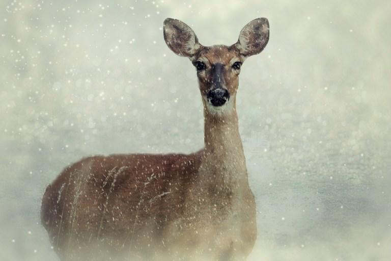 Wie Wildtiere im Schnee überleben