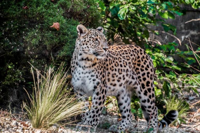 Deutsche Trophäenjäger erschiessen hunderte Wildtiere bedrohter Arten