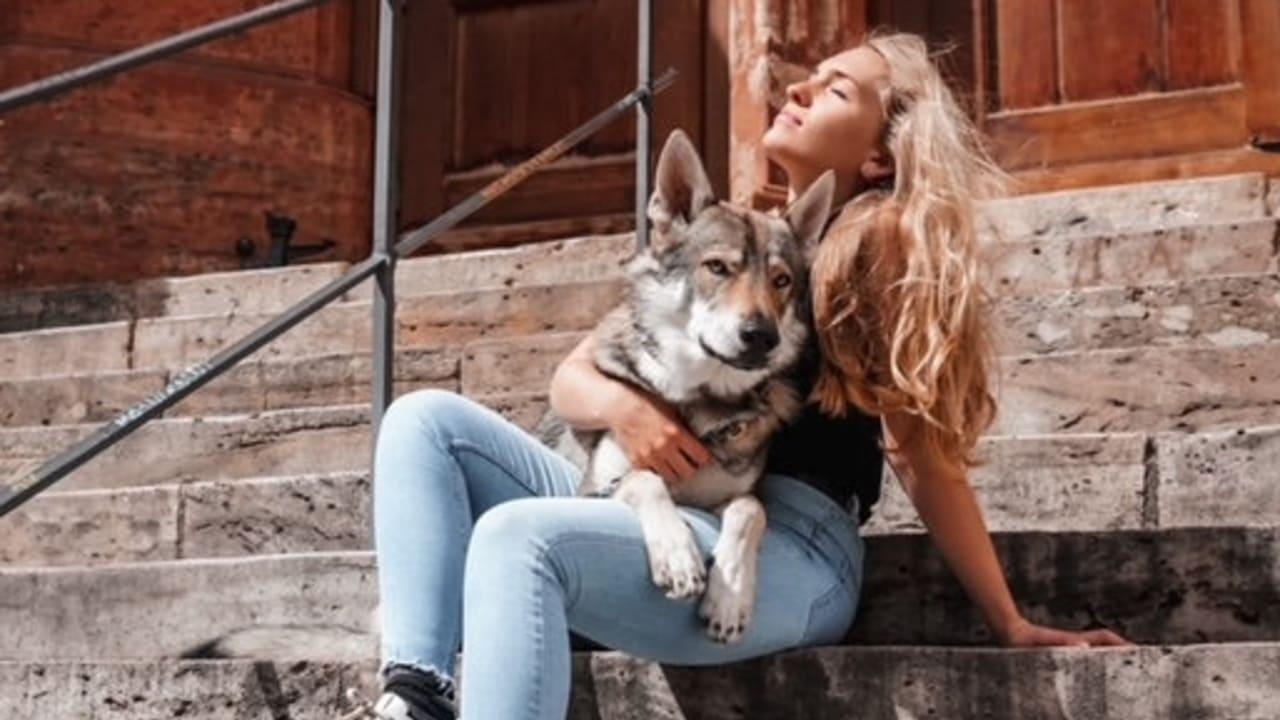 Hobby-Jäger erschiesst Wolfshund