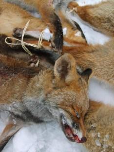 fox41