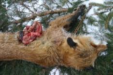 foxweek42