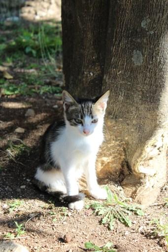 Thermon kitten