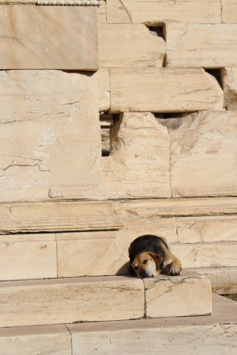 Brown Dog on the Erechtheion