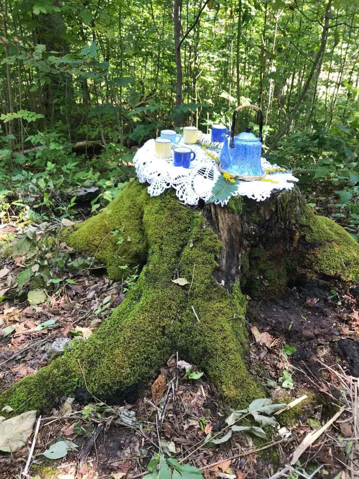 tea ceremony stump Colpoys forest