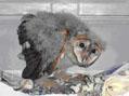 owl2thumb