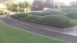 Sculpted Lantana Hedge Commercial Garden Service Sydney