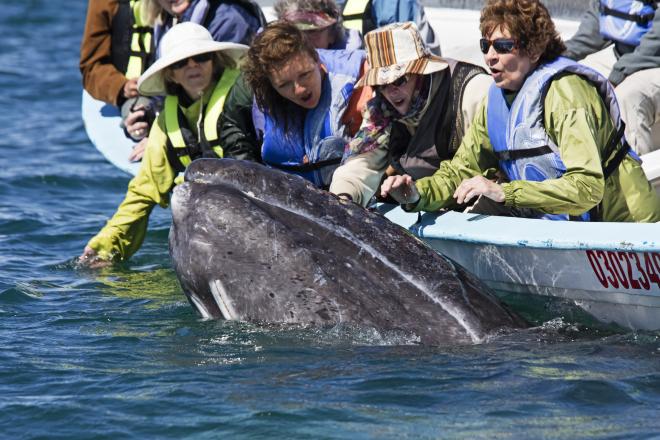 1CCK2669Turistas y ballena gris