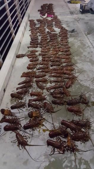 lobster poaching