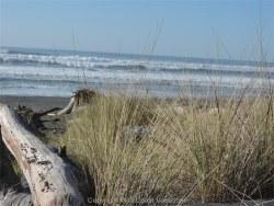 Sea House beach grass