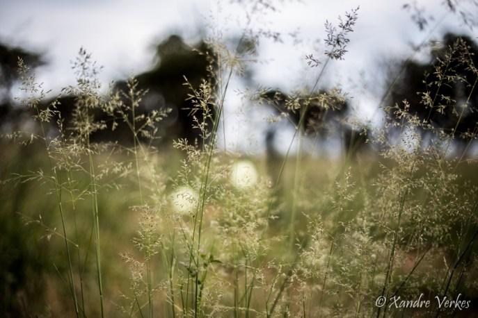 Xandre Verkes - Cattle Farm-34